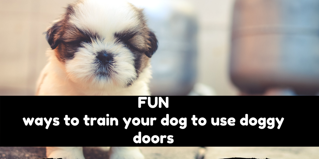 10 Dos And Donts When Buying Doggy Doors